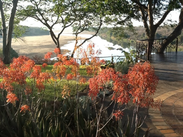 Aloes, looking down the Save River...