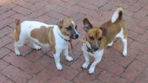 Chika and Kumba