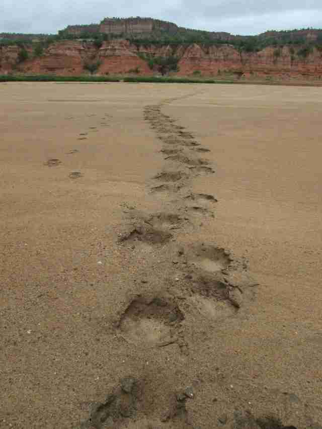 hippo tracks- lo res