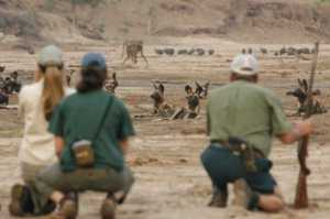 Steve and Wild dogs