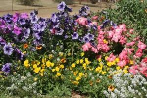 the garden at 214
