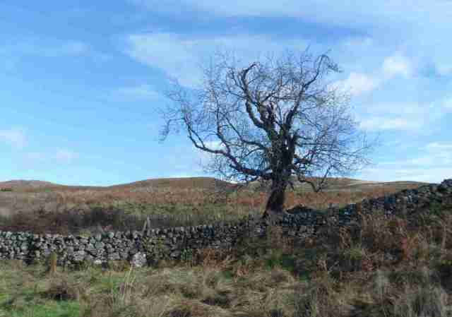 dead tree and drystone lo res