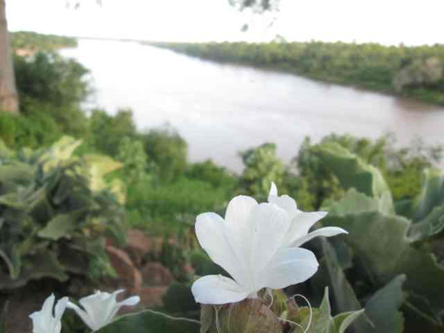Barleria and the Save River