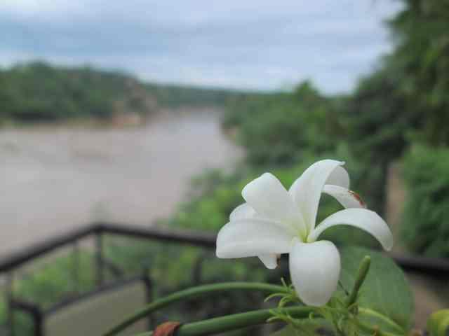 Holharina and Save River