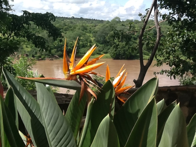 view of Strelitzia and Save River at Chilo Gorge