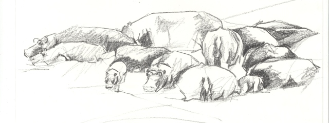 hippos- a  sketch by Lin Barrie