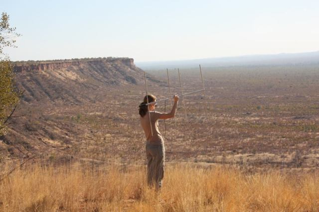 Rosemary Groom searching for signal from collared wild dogs in Gonarezhou