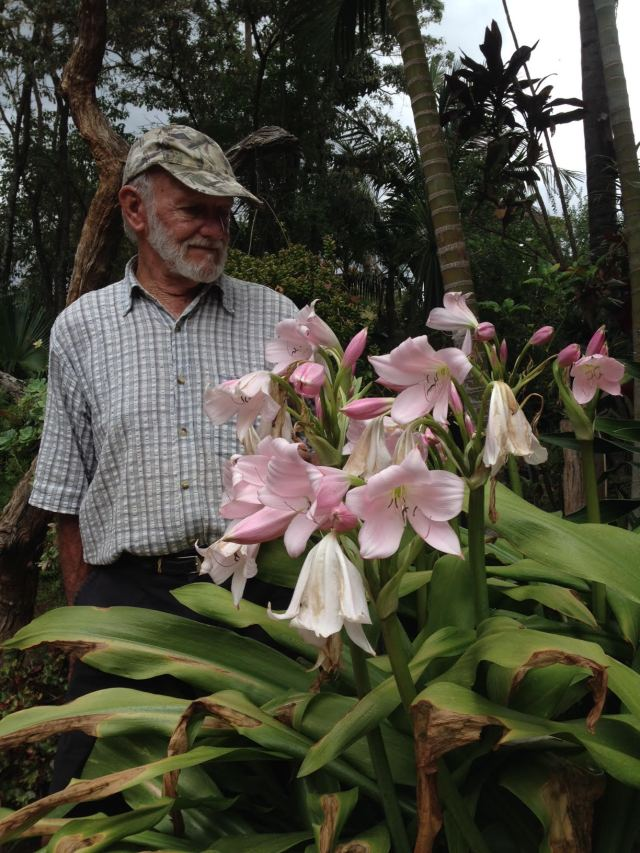 Dad and crinums