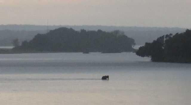 elephant crossing rainy river