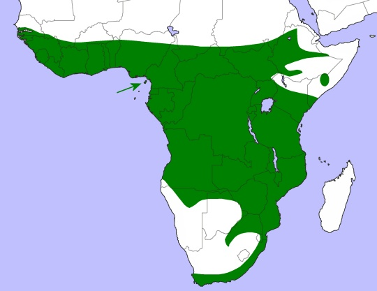 African wood owl range