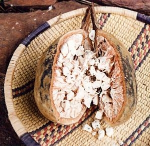 baobab pod