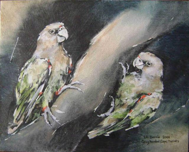 grey headed parrots