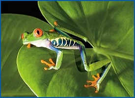 gorgeous tree frog