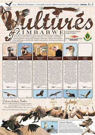 Vulture Poster by Birdlife Zimbabwe