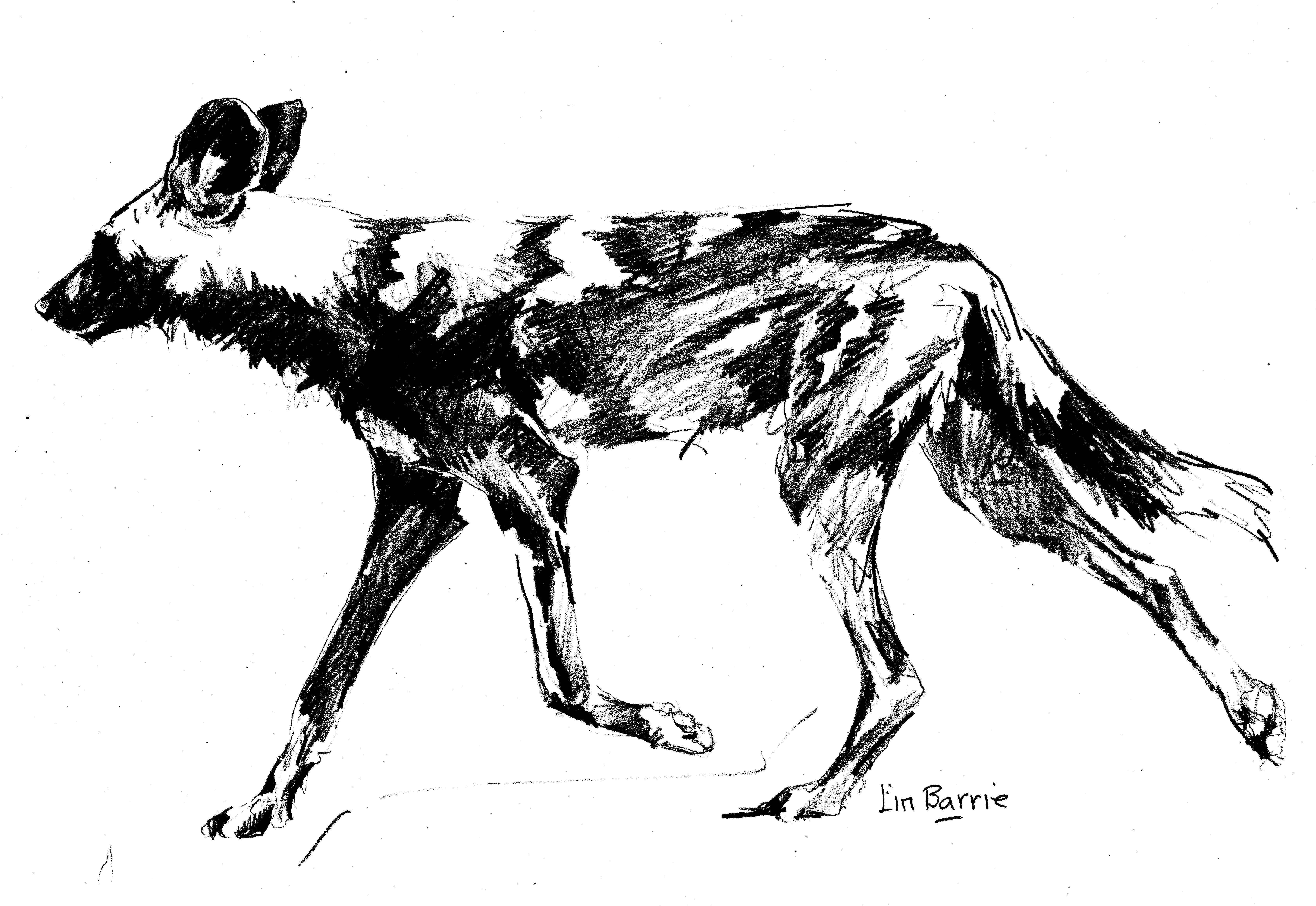 It is a photo of Clever African Wild Dog Drawing