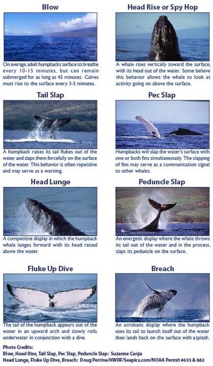 Whale behaviours
