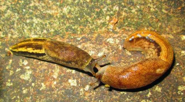 kissing slugs
