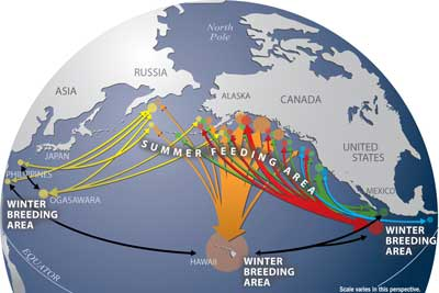 migratory routes