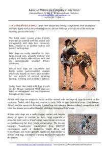 African Wild Dogs and AWCF