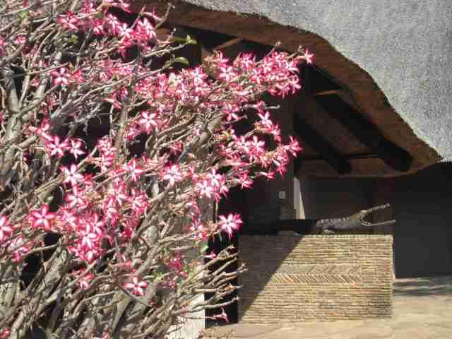 Chilo Gorge Safari Lodge Entrance