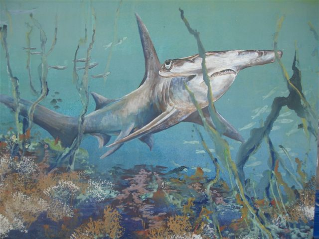 Hammerhead by Lin Barrie