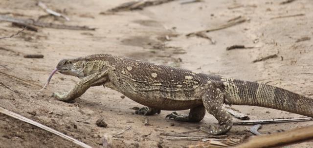 reptilian splendour...