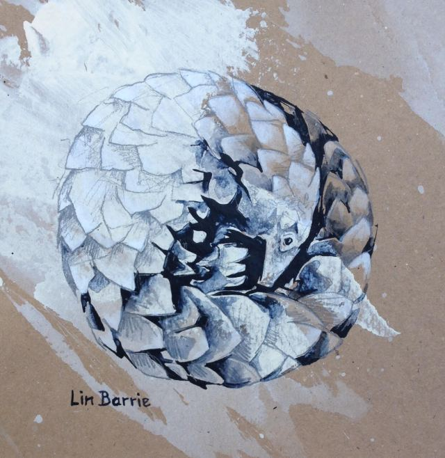 pangolin by lin