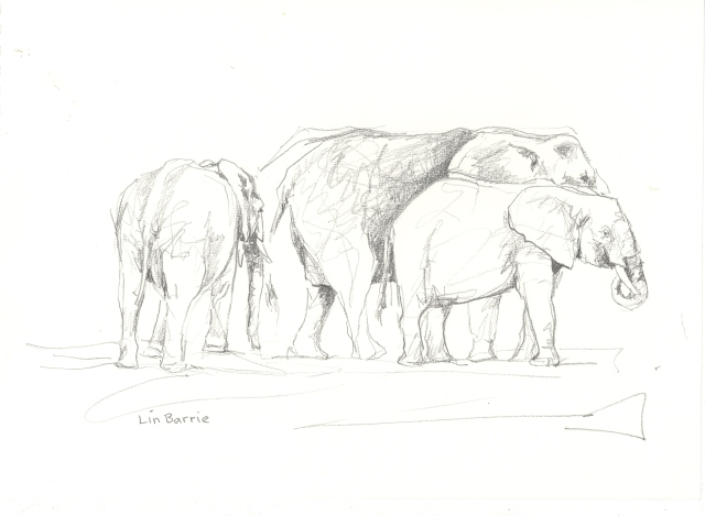 Elephant sketch by Lin Barrie