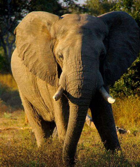 frankfurt elephant.jpg