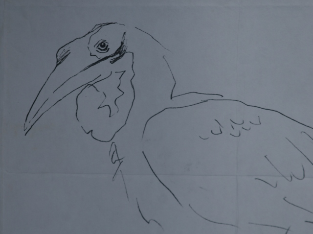 fascinating birds to sketch