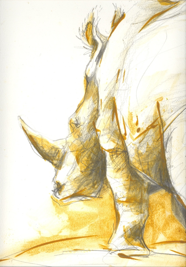 white rhino sketch by Lin Barrie
