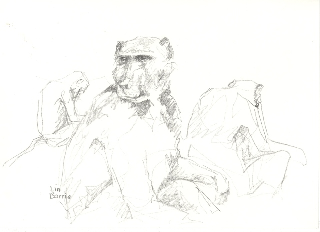 I never tire of sketching baboons...such characters...
