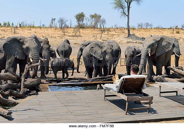 zimbabwe-matabeleland-north-province-hwange-national-park-somalisa-fm7f5b.jpg