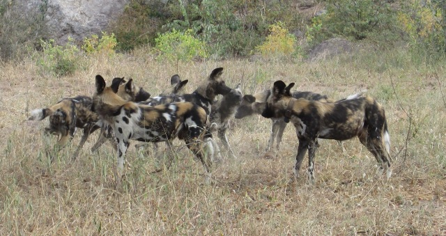 the pack consoles the Alpha female lo resjpg.jpg