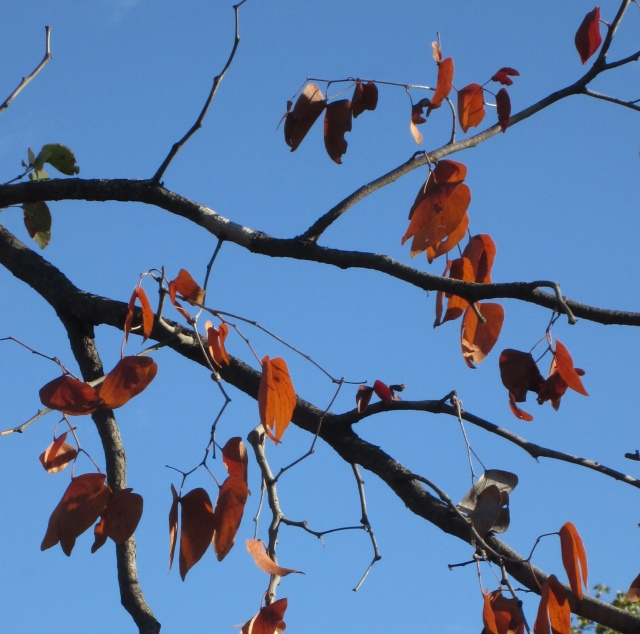leaves and cobalt sky