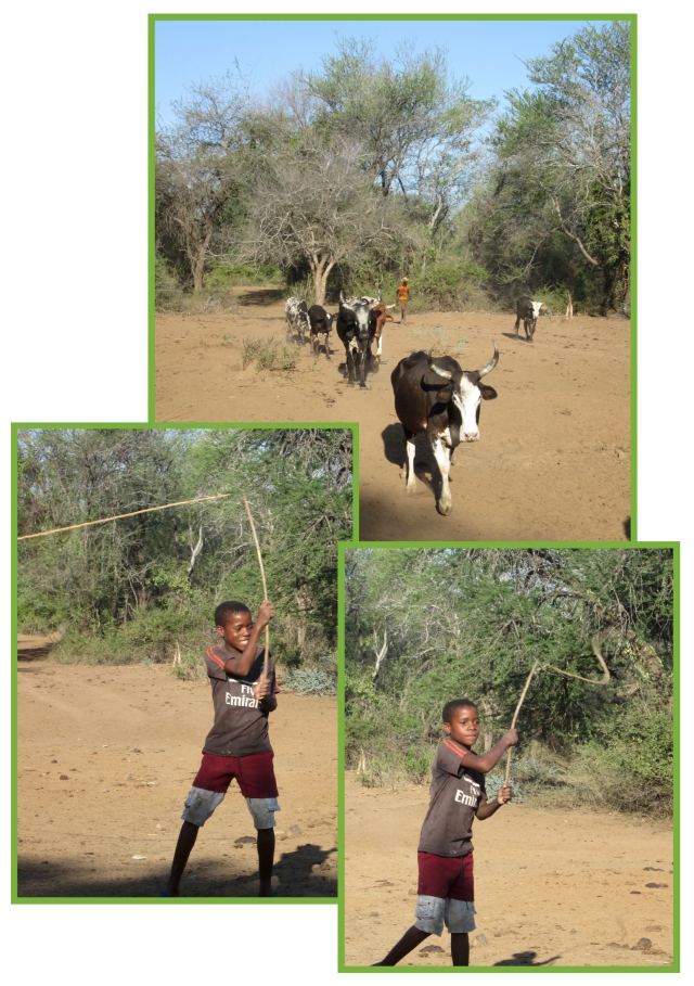 herdboys-jpg