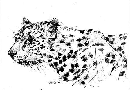 leopard sketch 3 BW