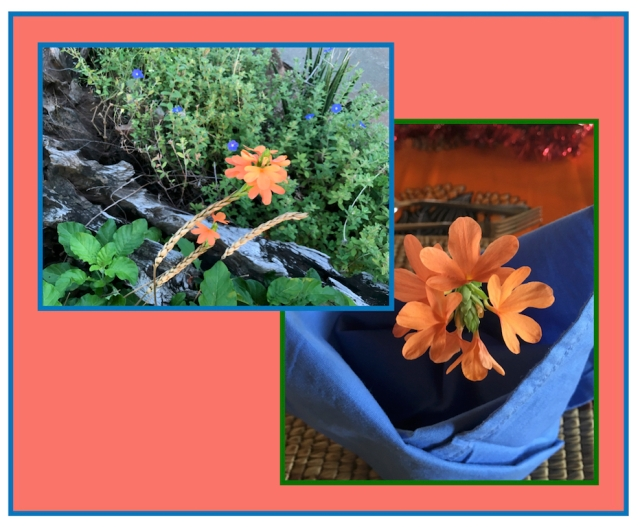 Living Coral and Crossandra flower lo res.jpg